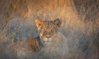 Kalahari Conservation Experience