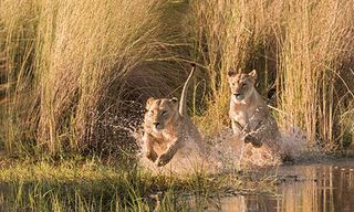 Okavango Delta Photo Safari: Under Canvas & Lodge