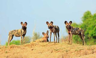 Festival Of Wildlife Zambia