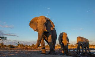 Botswana and Zimbabwe Ivory Route