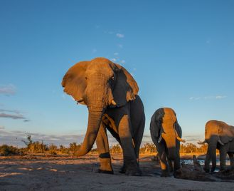 Botswana and Zimbabwe Ivory Route