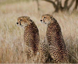 Amboseli, Tsavo, Masai Mara & Kenya Coast