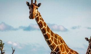Kenya Safari & Lamu