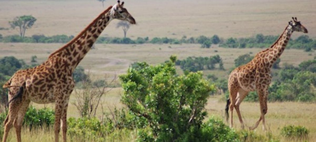 Masai Mara Safari | Absolute Africa | Wanderlust Trip Finder