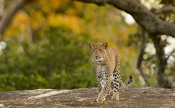 Discover Maldives U0026 Sri Lanka