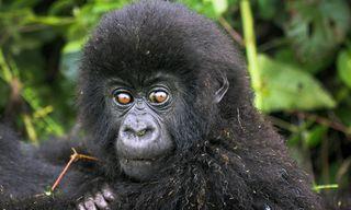 Uganda | Travel guide, tips and inspiration | Wanderlust